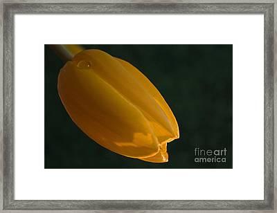 Single Again Framed Print by Sherry Hallemeier
