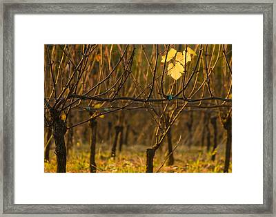 Single Leaf Framed Print by Jean Noren