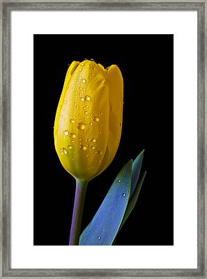Single Yellow Tulip Framed Print by Garry Gay