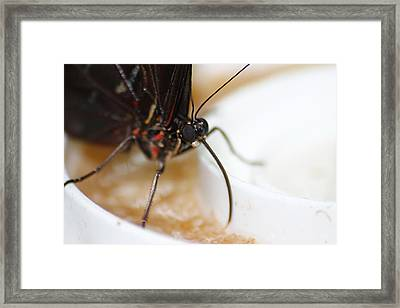 Sipping Nectar Framed Print by Scott Hovind