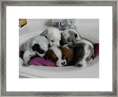 Six Clean Pups Framed Print by LaDonna Vinson
