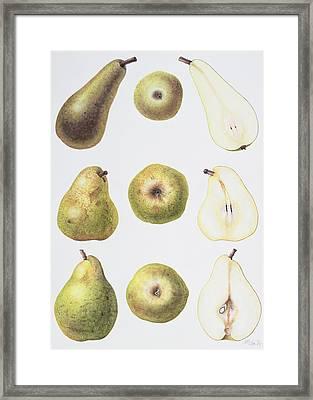 Six Pears Framed Print by Margaret Ann Eden