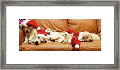 Six Puppies Sleep On Sofa, Some Wear Santa Hats Framed Print by Karina Santos