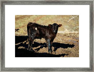 Sizing Me Up Framed Print by Cheryl Helms