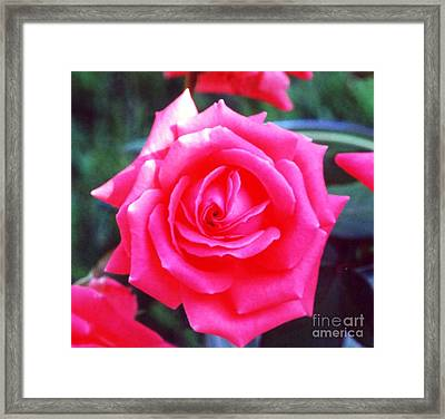 Sizzle Framed Print by Alys Caviness-Gober