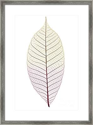 Skeleton Leaf Framed Print by Elena Elisseeva