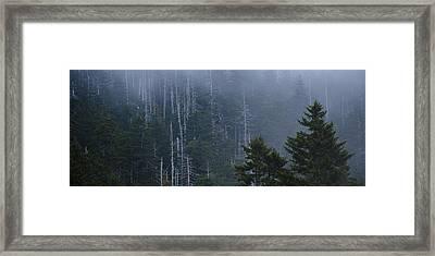 Skeletons In The Mist Framed Print by Ryan Heffron