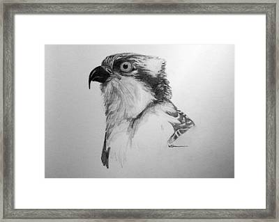 Sketch Of An Osprey Framed Print by Leslie M Browning