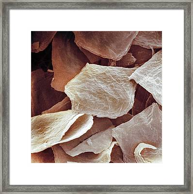 Skin Cells, Sem Framed Print by