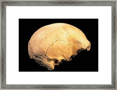 Skull 4, Sima De Los Huesos Framed Print by Javier Truebamsf