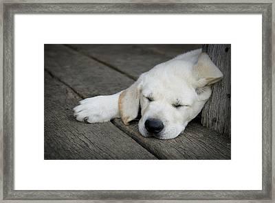 Sleeping Beauty Framed Print by Kacy Taylor