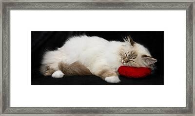 Sleeping Birman Framed Print by Melanie Viola