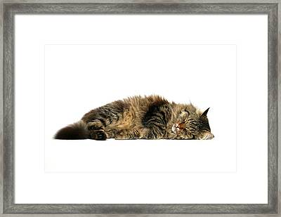 Sleeping Cat Framed Print by © Nico Piotto