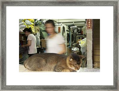 Sleeping Cat In Laundry Mat Framed Print by Sean Stauffer