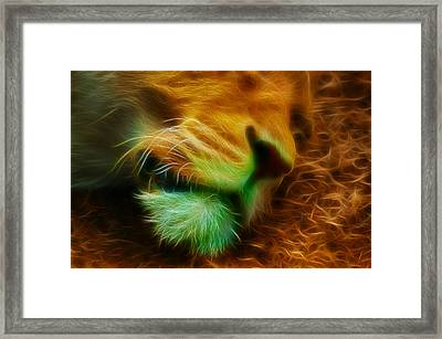 Sleeping Lion 2 Framed Print by Chris Thaxter
