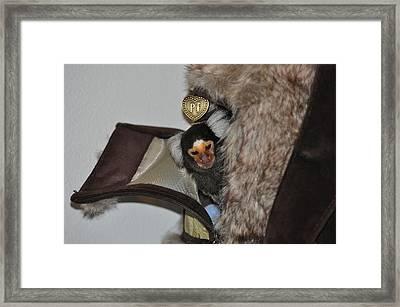 Sleepy Chewy The Marmoset Framed Print by Barry R Jones Jr