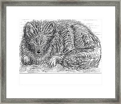 Sleepy Fox Framed Print by John A Fowler