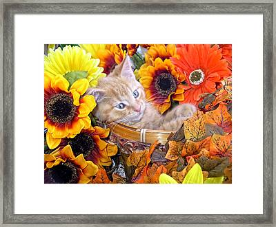Sleepy Kitty Cat In A Fall Flower Basket With Gerbera Daisies And Autumn Sunflowers Looking Out Framed Print by Chantal PhotoPix