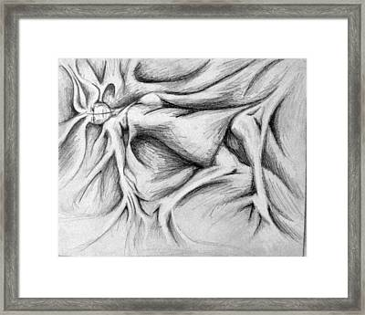 Sloth Framed Print by Steven  Burkett