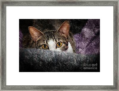 Sly Tilly Framed Print by Andee Design