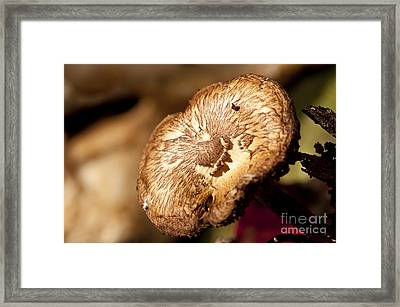 Small Brown Mushroom  Framed Print by Wilma  Birdwell