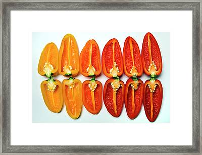Small Sweet Peppers Framed Print by Image by Catherine MacBride