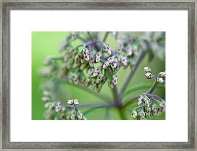 Small World Framed Print by Lois Bryan