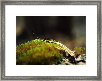 Small World Framed Print by Rebecca Sherman