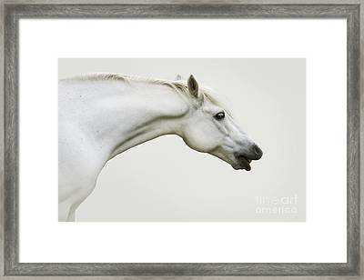 Smiling Grey Pony Framed Print by Ethiriel  Photography