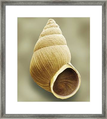 Snail, Sem Framed Print by Power And Syred