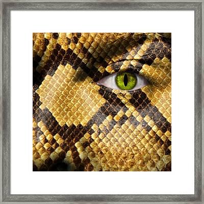 Snake Eye Framed Print by Semmick Photo
