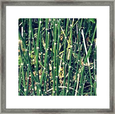 Snake Grass On The Beach Framed Print by Michelle Calkins