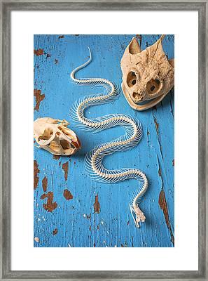 Snake Skeleton And Animal Skulls Framed Print by Garry Gay