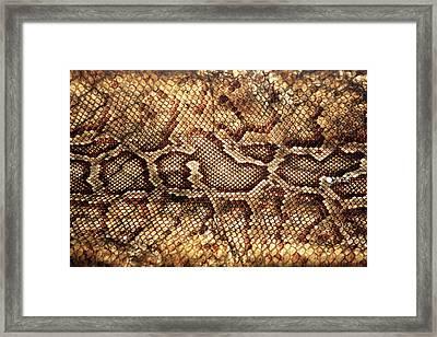Snake Skin Framed Print by Abner Merchan