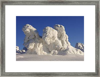 Snow-covered Norway Spruce Trees (picea Abies) Framed Print by Martin Ruegner