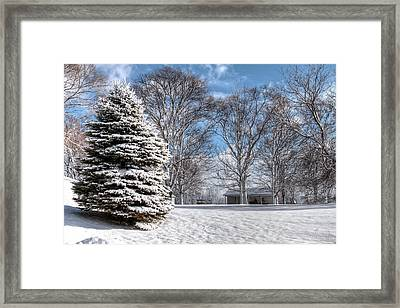 Snow Covered Pine Framed Print by Richard Gregurich