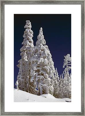 Snow-covered Pine Trees On Mount Hood Framed Print by Natural Selection Craig Tuttle