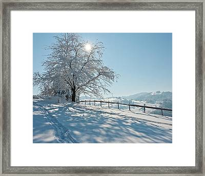 Snow Covered Tree With Sun Shining Through It Framed Print by © Peter Boehi