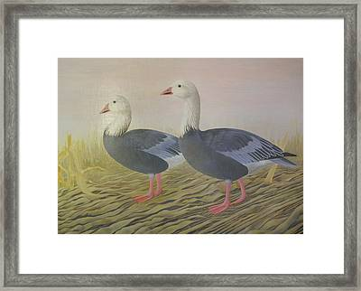 Snow Geese Framed Print by Alan Suliber