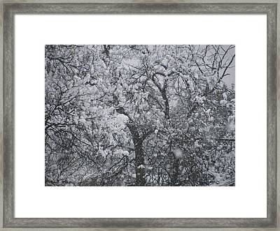 Snowblind Framed Print by Shawn Hughes