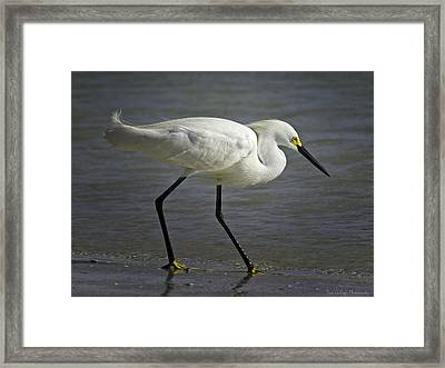 Snowy Egret By The Lagoon Framed Print by Fran Gallogly