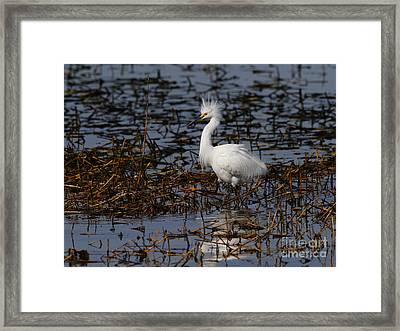 Snowy Egret . Solitude . 7d11963 Framed Print by Wingsdomain Art and Photography