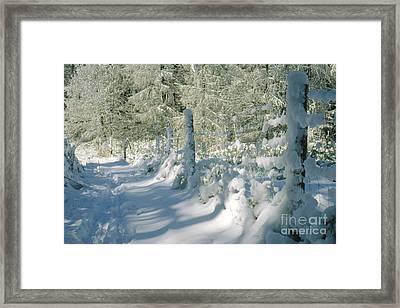 Snowy Footpath In Winter Wonderland Framed Print by Heiko Koehrer-Wagner