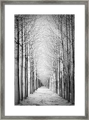 Snowy Forest Framed Print by by Rafael Zwiegincew