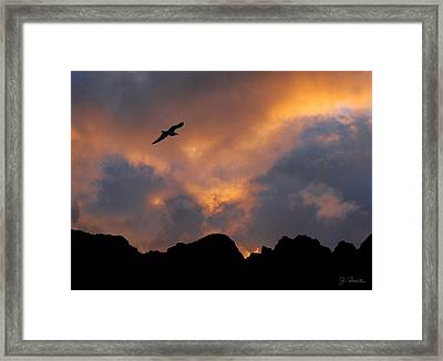 Soaring In The Midnight Sun Framed Print by Joe Bonita