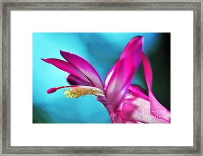 Soft And Delicate Cactus Bloom 3 Framed Print by Kaye Menner