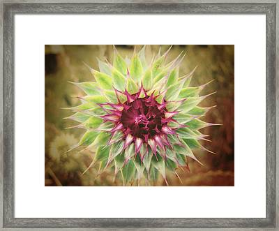 Soft As A Thistle Framed Print by Amy Tyler