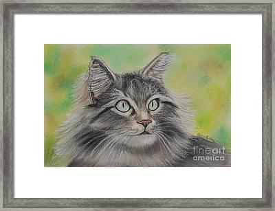 Soft Kitty Framed Print by Julie Brugh Riffey