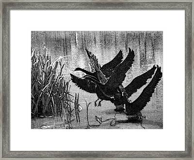 Soft Landings Framed Print by Lenore Senior