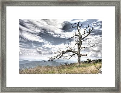 Solemn Tree Framed Print by Michael Clubb